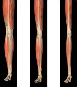 Muscle-split